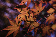 """blues Art"" Metal Prints - Autumn Colors - Landscapes by Jean OKeeffe Metal Print by Jean OKeeffe"