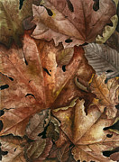 Colors Of Autumn Painting Posters - Autumn Colors Poster by Marie Downing