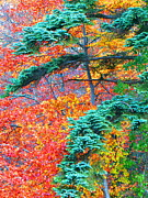 Autumn Colors Print by Mt Lee