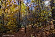 Barbara Bowen - Autumn colors on Blood Mountain