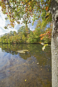 World Changing Prints - Autumn Colors on the Delaware and Raritan Canal  Print by David Letts
