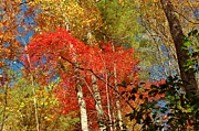 Patrick Shupert Metal Prints - Autumn Colors Metal Print by Patrick Shupert