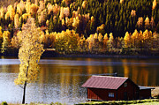 Fall Colors Autumn Colors Posters - Autumn Colors Trees Lake And Forest Poster by Christian Lagereek