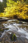 Clear Fall Day Posters - Autumn Colours Along Santiam River In Poster by Craig Tuttle