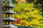 Colors Of Autumn Prints - Autumn Colours At The Japanese Garden Print by Craig Tuttle