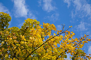 Paul Lilley Metal Prints - Autumn Colours On An October Morning . Metal Print by Paul Lilley