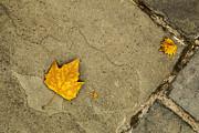 Karol  Livote - Autumn Comes In All Sizes