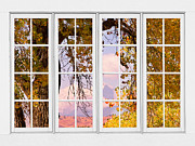 Gold Trees Framed Prints - Autumn Cottonwood Tree Longs Peak White Window View Framed Print by James Bo Insogna