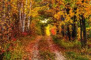 Nikkor Prints - Autumn Country Lane - Horizontal Print by Cory Christensen