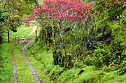 Country Driveway Photo Posters - Autumn Country Lane Poster by Thomas R Fletcher