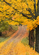 Alan L Graham - Autumn Country Road