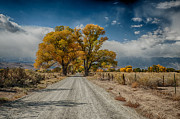 Fall Metal Prints - Autumn Country Road Metal Print by Cat Connor