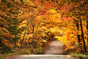 Country Dirt Roads Posters - Autumn Country Road Poster by Wade Crutchfield