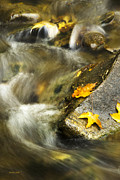 Fall Leaves Prints - Autumn Creek Print by Christina Rollo
