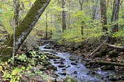 Indiana Autumn Prints - Autumn Creek Print by Jennifer Snelling