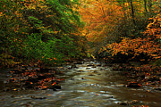 Virginia Landscape Posters - Autumn Creek Poster by Melissa Petrey