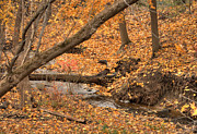 Creekbed Framed Prints - Autumn Creekbed Framed Print by Deborah Smolinske