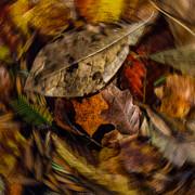 Doug Sturgess - Autumn Dance