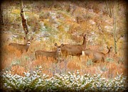 Gore Range Prints - Autumn Deer Print by Danielle Marie