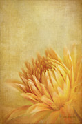 Textured Florals Prints - Autumn Delight Print by Reflective Moments  Photography and Digital Art Images