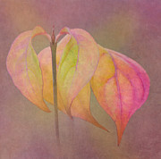 Dogwood Photos - Autumn Dogwood 2 by Angie Vogel