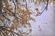 Yellow Leaves Prints - Autumn Dream Print by Guido Montanes Castillo