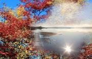 Reflections In Water Posters - Autumn Dreaming Poster by Cathy  Beharriell