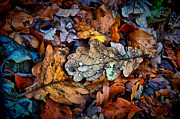 Rain Drop Photo Posters - Autumn Drop Poster by Karl Wilson