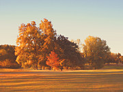 Light And Shadows Prints - Autumn Evening on the Golf Course Print by Ann Powell