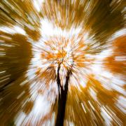 Autumn Woods Metal Prints - Autumn Explosion Metal Print by David Bowman