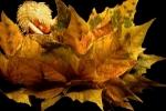 Navo Art - Autumn Fairy