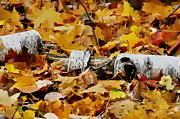 Andrea Kollo - Autumn Fallen Birch