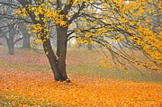 Picturesque Metal Prints - Autumn Fallen Metal Print by Terri Gostola