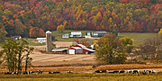 Amish Farms Photo Framed Prints - Autumn Farming Scene Framed Print by Randall Branham