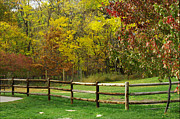 Split Rail Fence Photos - Autumn Fences by Linda Steele