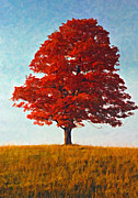Lone Tree Prints - Autumn Flame oil Print by Steve Harrington