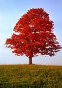 Autumn Flame Print by Steve Harrington