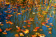 Photos Of Autumn Photos - Autumn  Floating by Peggy  Franz