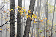 Williams Photos - Autumn Fog Forest by Thomas R Fletcher