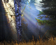 Fir Trees Posters - Autumn Fog With Sun Rays Poster by Theresa Tahara