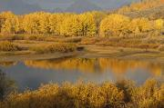 Greater Yellowstone Ecosystem Posters - Autumn Foliage Surrounds A Pool In The Poster by David Ponton