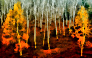 Ellen Lacey Prints - Autumn Forest Print by Ellen Lacey