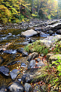 Williams River Scenic Backway Prints - Autumn Forest River Print by Thomas R Fletcher