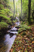 Water Flowing Prints - Autumn Forest Stream Print by Ian Mitchell