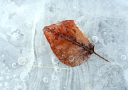 Ice Metal Prints - Autumn Frozen Metal Print by Mike  Dawson
