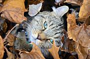 Susan Leggett - Autumn Fun
