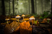 Toadstool Photo Posters - Autumn Fungus Poster by Ian Hufton
