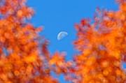 Andrea Kollo - Autumn Glory