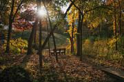 Darlene Bushue - Autumn Glory