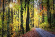 Gatlinburg Tennessee Posters - Autumn Glory Poster by William Britten